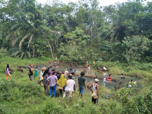 Tradisi Masyarakat Desa Lubuk Lawas dalam mencari ikan dipayo pada musim kemarau.